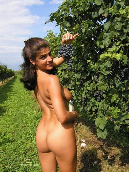 Pic #4 - Sweet Vanessa : The Vineyard