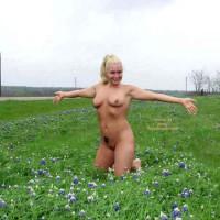 Texas Bluebonnett