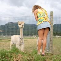 Road Trip Alpaca Ranch