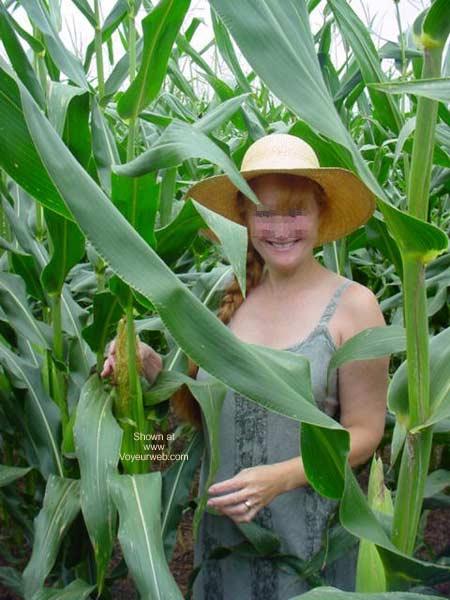 Pic #1 - Jigsey's Corn Field