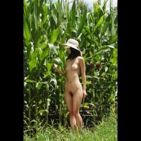 Nude Girl In Cornfield - Nude In Nature