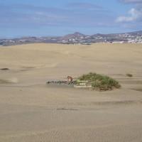 Sand Dune Dudes
