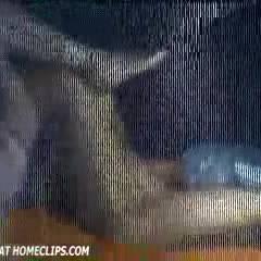 Webcam Follies