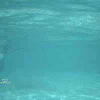 Underwater At A Nude Hawaii Beach 2