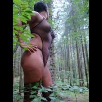 Net In The Woods