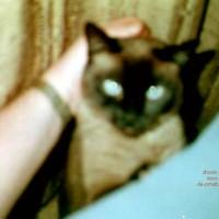 Sasha      - My Sweet Pussy