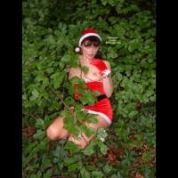 Lily Lust - Saucy Santa