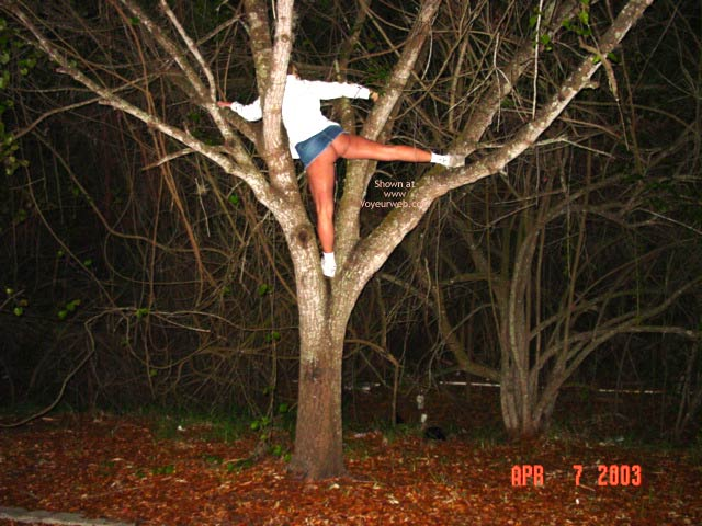Pic #1 - Up A Tree