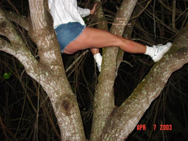 Pic #2 - Up A Tree