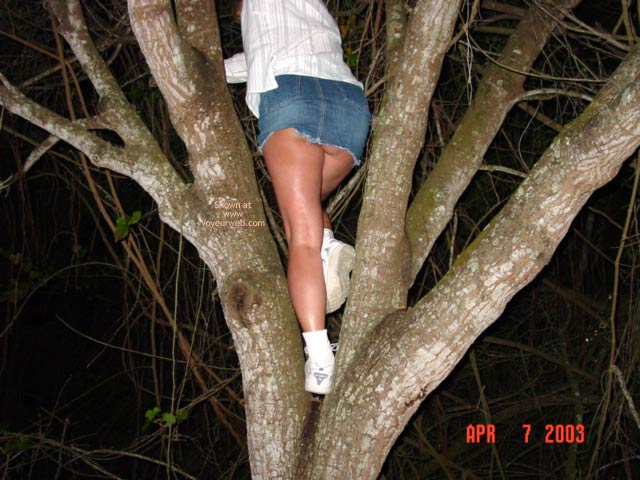Pic #3 - Up A Tree