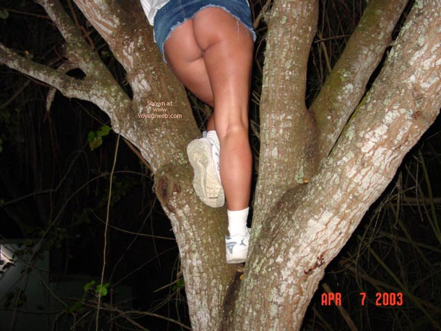 Pic #4 - Up A Tree