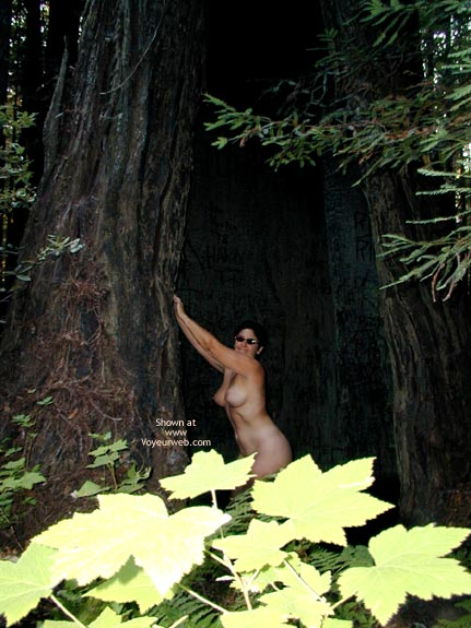 Pic #6 - Romp In The Redwoods