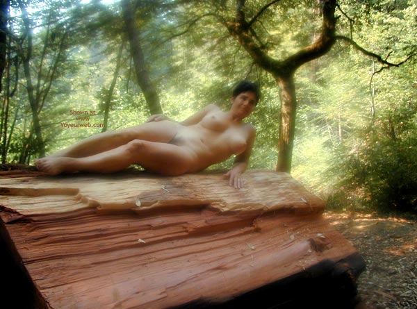 Pic #9 - Romp In The Redwoods