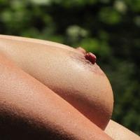 Medium tits of my wife - My Wife in the Sun