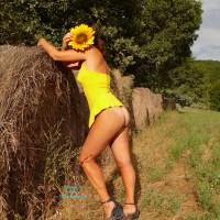 Desire of Sunflower