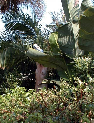 Pic #1 - a day in the tropics