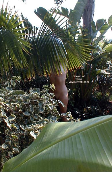 Pic #3 - a day in the tropics
