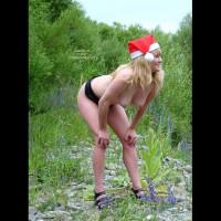 Chickabit's Christmas Cheer