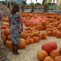 *NY Upskirt at The Pumpkin Patch!