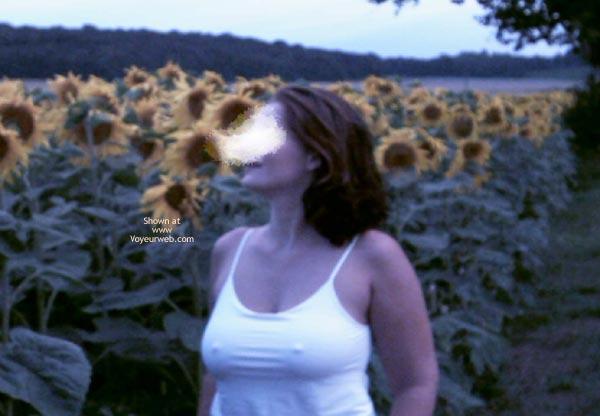 Pic #2 - Sunflowers Field 2003, 26 yo, Germany