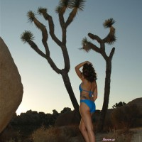 Hot August In Joshua Tree
