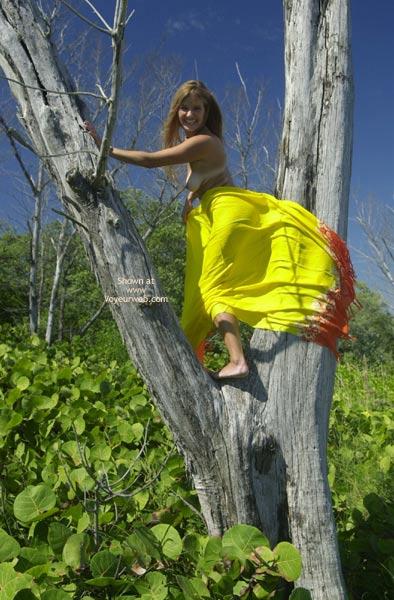 Pic #1 - Merci Climbs A Tree