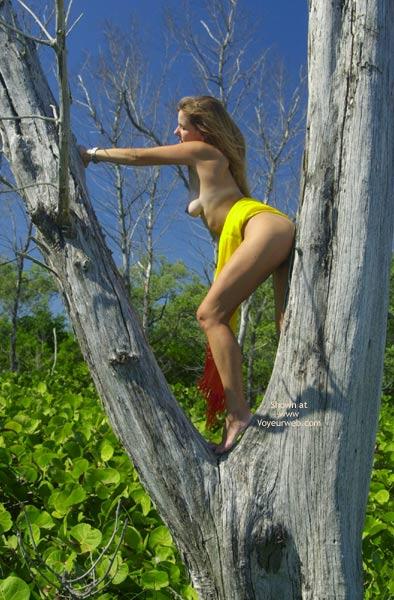 Pic #3 - Merci Climbs A Tree