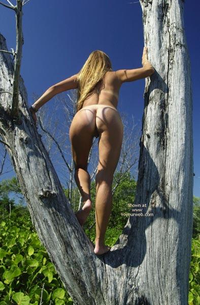 Pic #5 - Merci Climbs A Tree