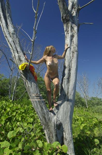 Pic #8 - Merci Climbs A Tree